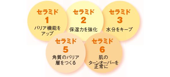 5種のセラミド