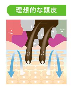 ideal-scalp-image