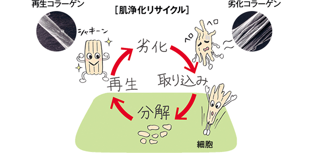 肌浄化リサイクル