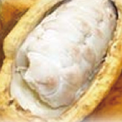 cacao-seed-extract-image