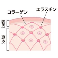 collagen-image