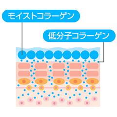 2種のコラーゲンimage